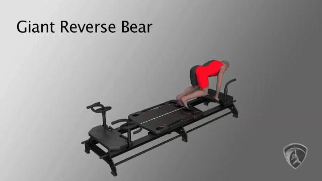 Giant Reverse Bear