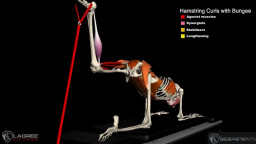 Hamstring Curls with the Bungee